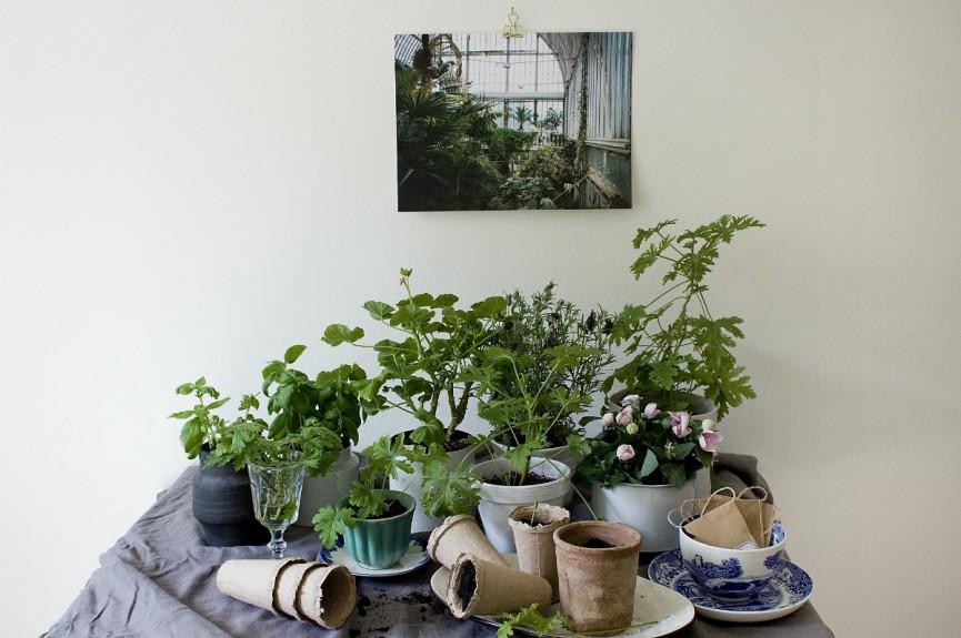 Secret garden + green 1200x797
