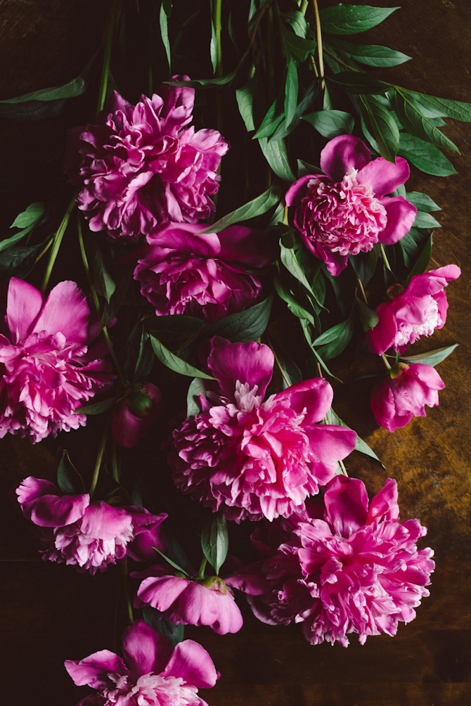 Peonies by Babes in Boyland