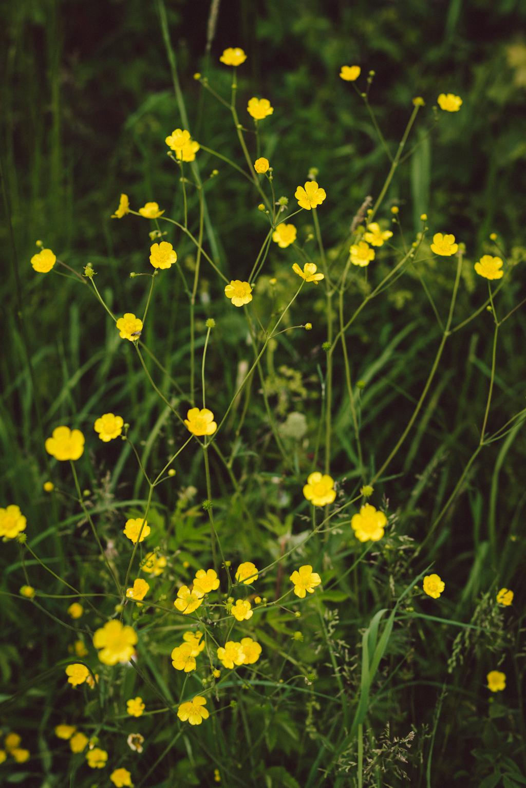 Babes_in_Boyland-Mindummer_flowers-2016-5