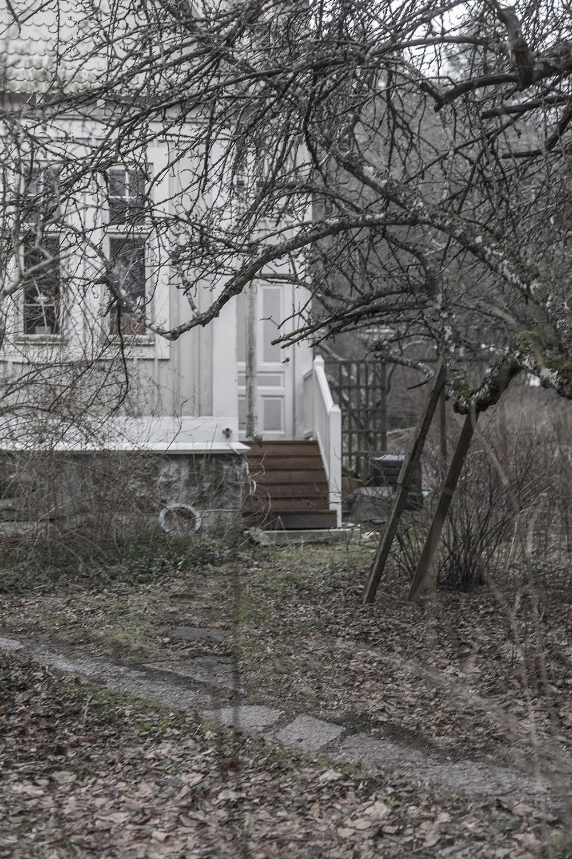 strenghielm_saltis.3