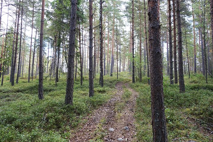 skog_langblondin_0731