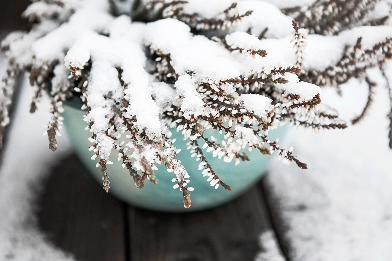 snow, Anna Malmberg
