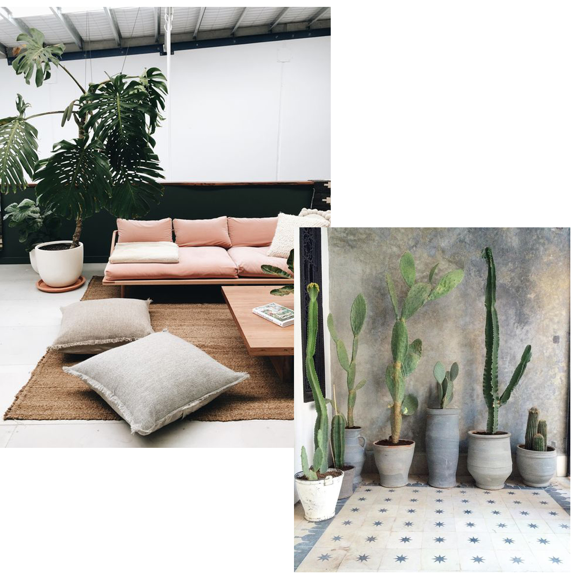 Big-plants