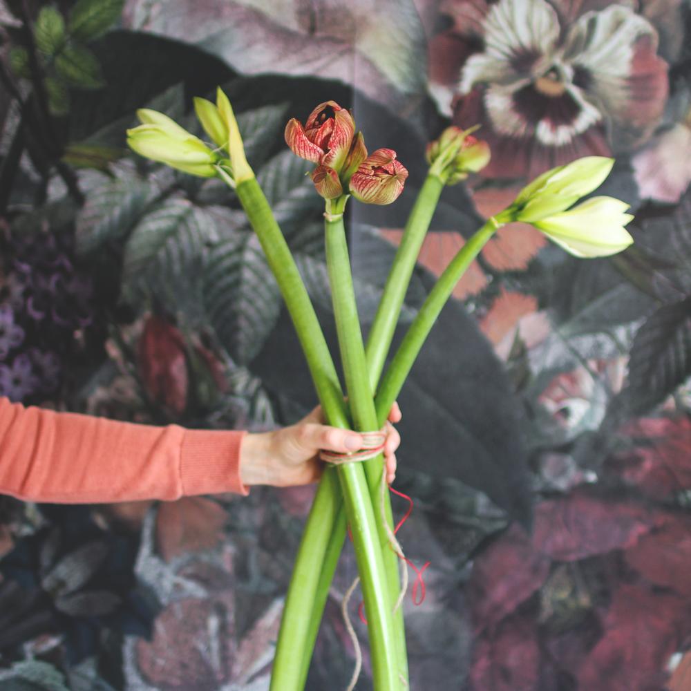 fredagsbukett amaryllis