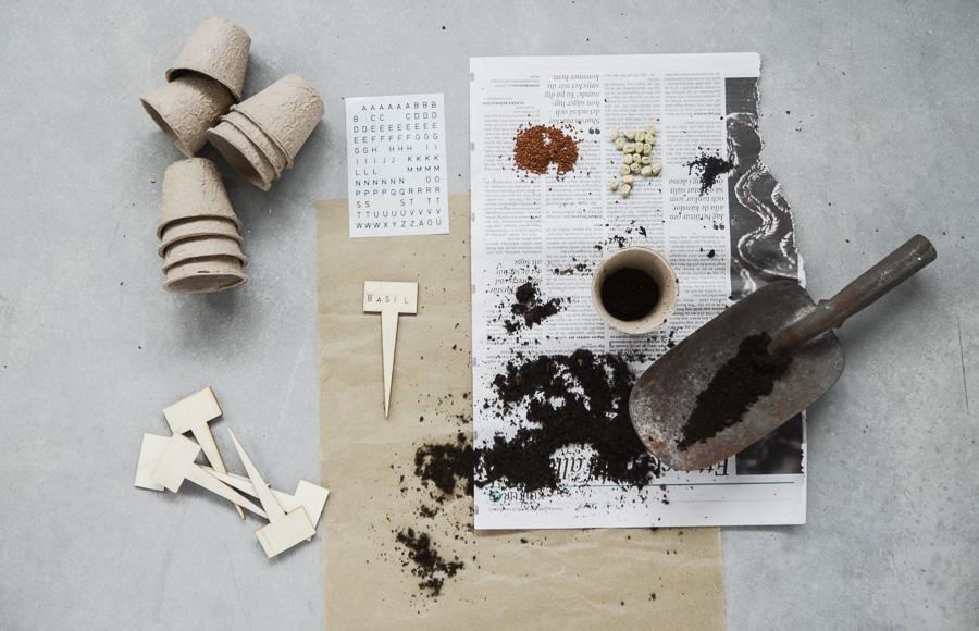 odla-basilika-krasse-artskott