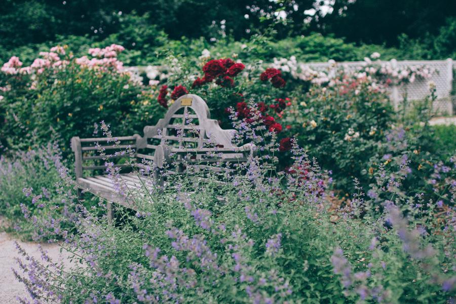 rose garden snug harbour-5