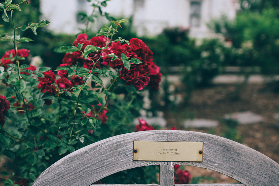 rose garden snug harbour-6