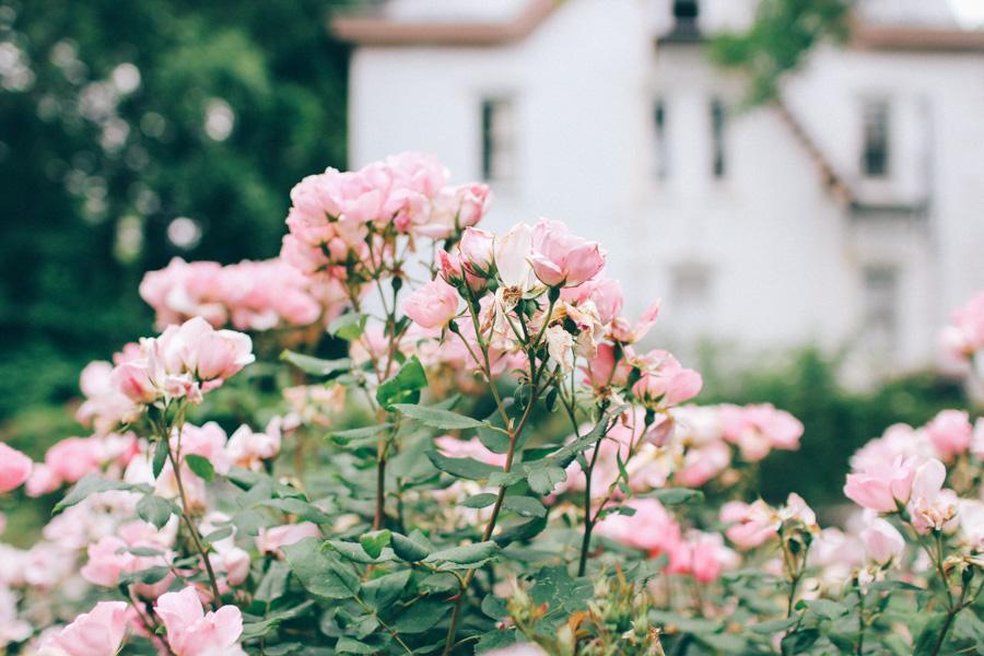 rose garden snug harbour-8