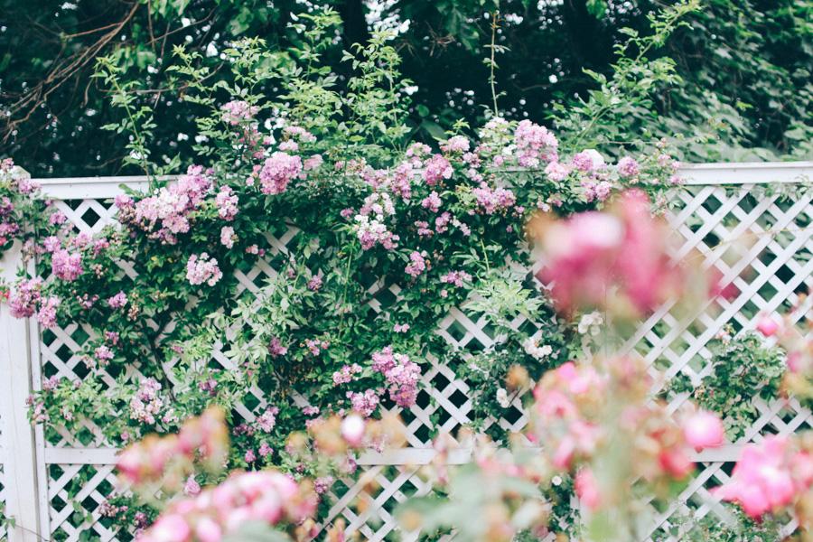 rose garden snug harbour-9