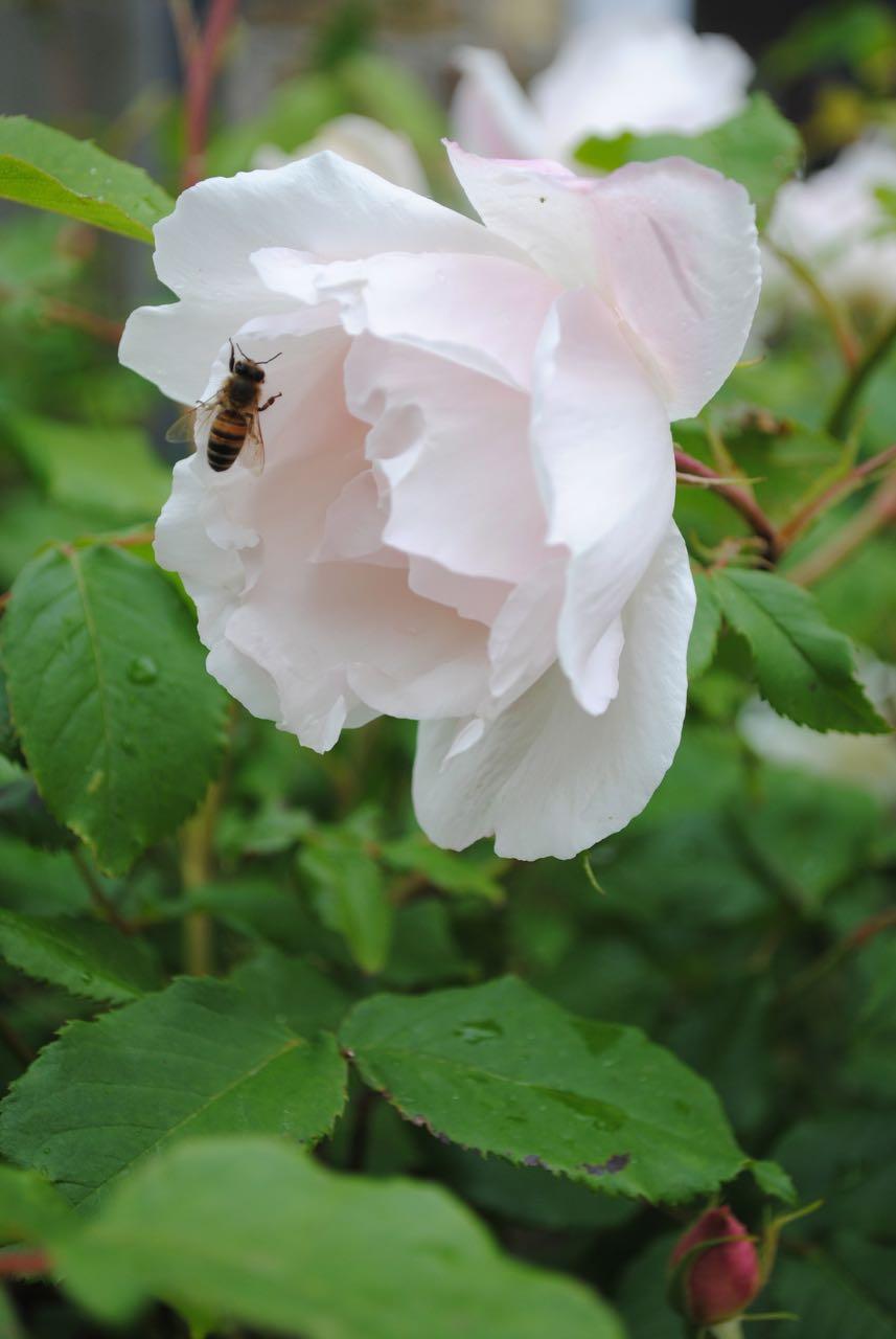 Mvh blommor tradgarden