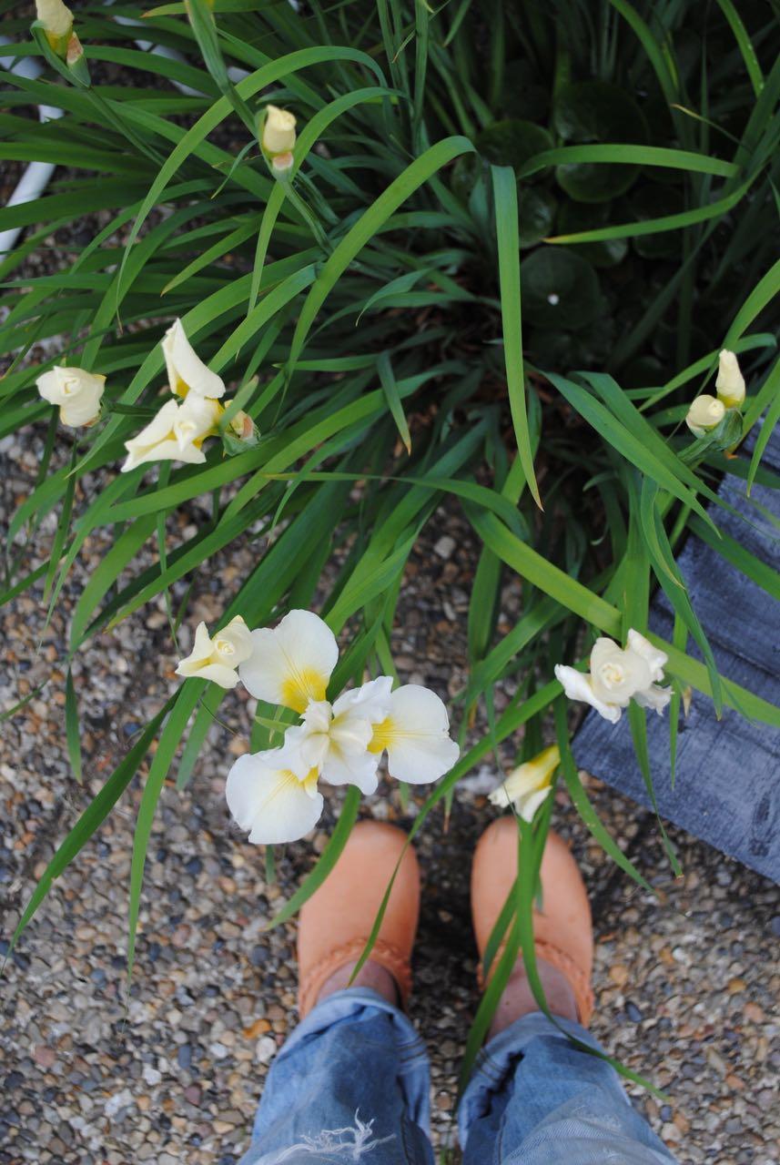 Mvh blommor tradgarden1